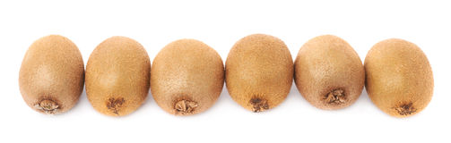 Line of six kiwifruits isolated Stock Images