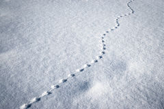 Line of small animal tracks in the snow. Winter background line of small animal tracks in the snow Stock Images