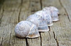 A line of snail shells. Stock Image