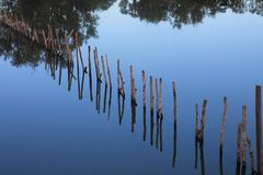 Line of sticks reflected in still water pond Stock Photos
