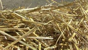 Line straw, shot slider stock footage