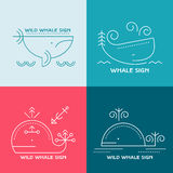 Line style whale - thin line style vector illustration. Whale and sperm whale (cachalot) - line style illustration set of marine mammals. Minimalistic outlined Stock Image