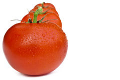 Line of tomatoes Royalty Free Stock Photography