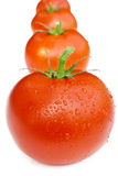 Line of tomatoes Stock Image