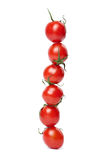 Line of tomatoes isolated Stock Image