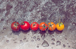 Line of tomatoes Royalty Free Stock Photo