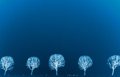 Line of trees Royalty Free Stock Photos