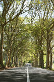 Line of Trees. Line up of trees on a road in the North of Mauritius. The rays of light penetrating the braches and leaves stock images
