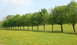 Line of trees. Straight Line of trees with copy space Royalty Free Stock Photo