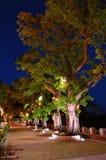 line trees Στοκ Φωτογραφία