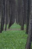 A line of trees. Tree Royalty Free Stock Image