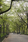 Line of trees. In Central park NYC Stock Image