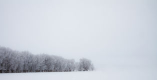 Line of trees against white Stock Photo