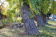 A Line of Trees Along the River. Trees line the river with a park bench along the side Royalty Free Stock Photo