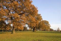 Line of trees. Autumn scenery Royalty Free Stock Photos