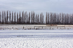 Line of trees behind snow covered field Stock Images
