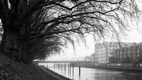 Line of trees - Bremen, Germany stock images