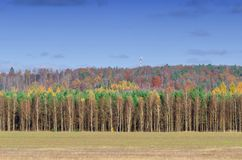 LINE OF TREES. Colorful autumn in the landscape of the natural environment Royalty Free Stock Photo