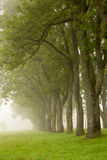 Line of trees disappearing to fog Royalty Free Stock Photo