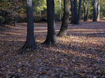 Line of Trees in Fall Royalty Free Stock Photos