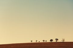 Line of trees in field Stock Photo