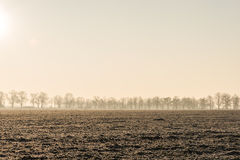 Line of trees on a field Royalty Free Stock Image