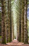 Line of trees in a forrest stock photos