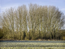 Line of trees and a gate to the Footpath Royalty Free Stock Photos