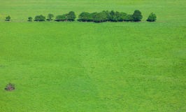 Line of trees on a green field. Stock Photography