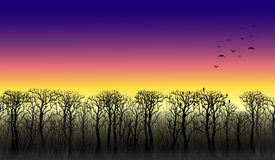 Line of trees on the horizon. Sunset Stock Images