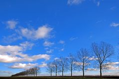 Line of trees through a meadow Royalty Free Stock Photos