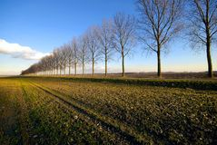 Line of trees through a meadow Royalty Free Stock Photo