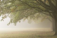 Trees in the mist on Southampton Common royalty free stock photo