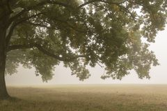 Trees in the mist on Southampton Common stock image
