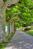 Line of trees in a park Stock Images