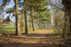 Line of trees in a park with a pathway Royalty Free Stock Photos