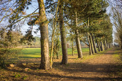 Line of trees in a park with a pathway Stock Photography