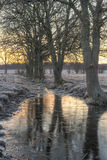 Line of trees by a puddle Royalty Free Stock Photos
