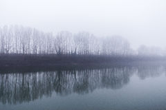 A line of trees beside reflects in the river on a foggy day Stock Photography