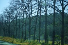 Line of trees. Row of bare trees. No leaves. Northern NSW, Australia Royalty Free Stock Photo