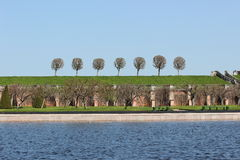 Line of trees. Stock Images