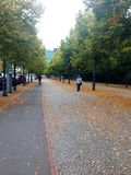 Line of trees. Sidewalk in autumn with yellow  leaves on the ground at berlin Royalty Free Stock Photography