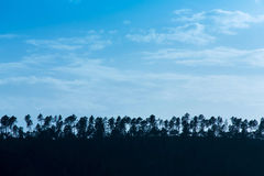 Line of trees silhouette on the horizon Stock Photography