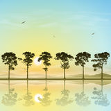 Line of Trees Royalty Free Stock Images