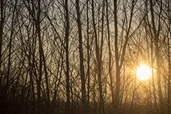 Tree silhouettes in the sunshine stock image