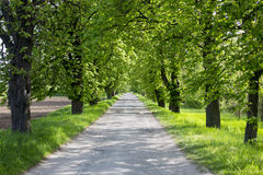 Line of trees. Still life Royalty Free Stock Photography