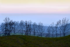 Line of trees at sunset Royalty Free Stock Images