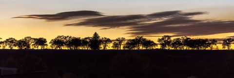 Line of trees at sunset in Montrose Colorado. OCTOBER 12, 2017 - Line of trees at sunset in Montrose Colorado Stock Image