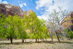 Line of Trees in Zion Stock Photography