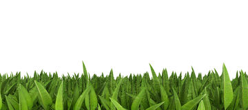 Line of tropical leaves. A row of tropical leaves against a white background Royalty Free Stock Photos